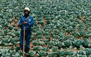 Black farmers to receive payouts in $1.2 billion from federal lawsuit settlement