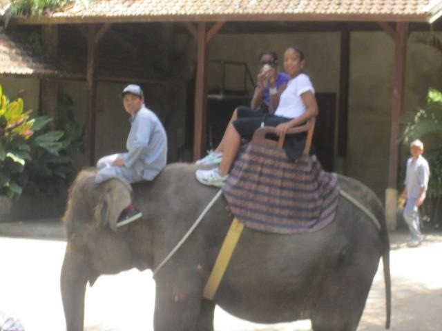 Who wants to ride a horse when you can ride an elephant in Bali?