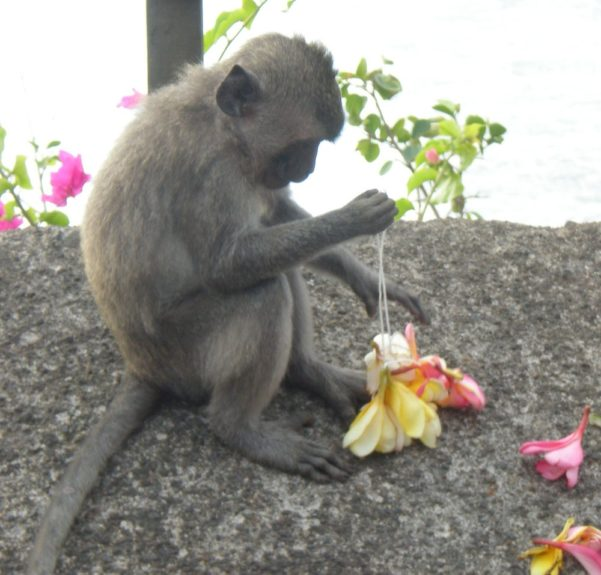 I don't why these cute little monkeys terrified me!