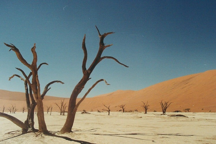 "The ""Dead"" trees of Deadvlei (Photo Credit: Lee Litumbe)"