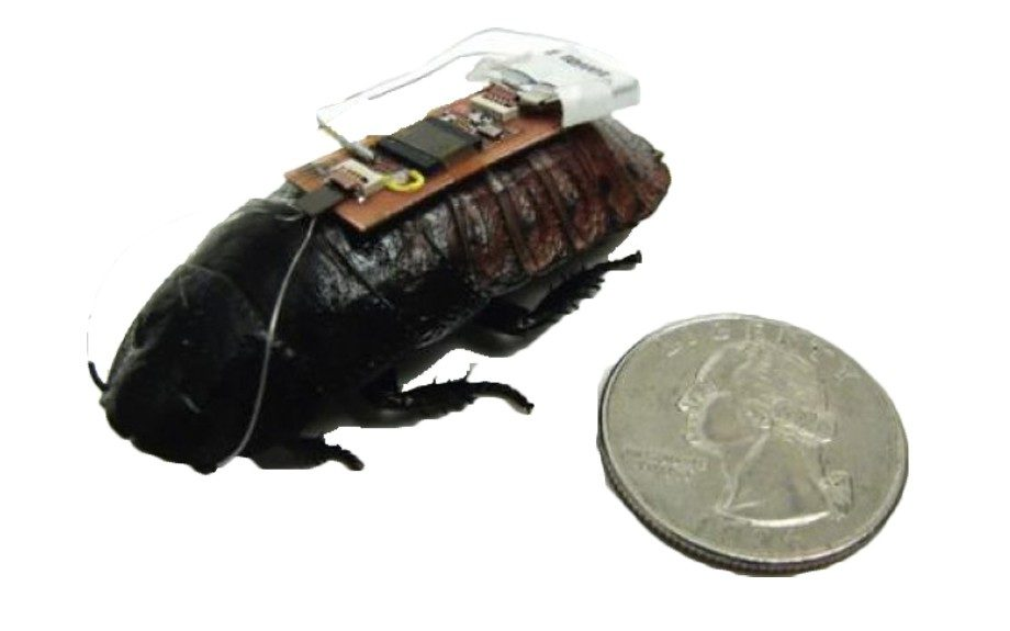 A team of researchers at NC State University may have found a way to remote-control roaches to help find disaster victims.