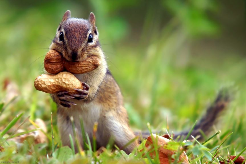 A single squirrel causes $300,000 in damages to building
